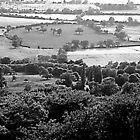 Trees near Southam by John Bromley