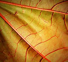 Leaf Abstract- Part 2 by Tara  Turner
