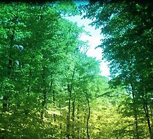 Sunlight through the Canopy by Aasma