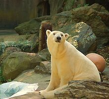 Oo my white polar bear  by loiteke