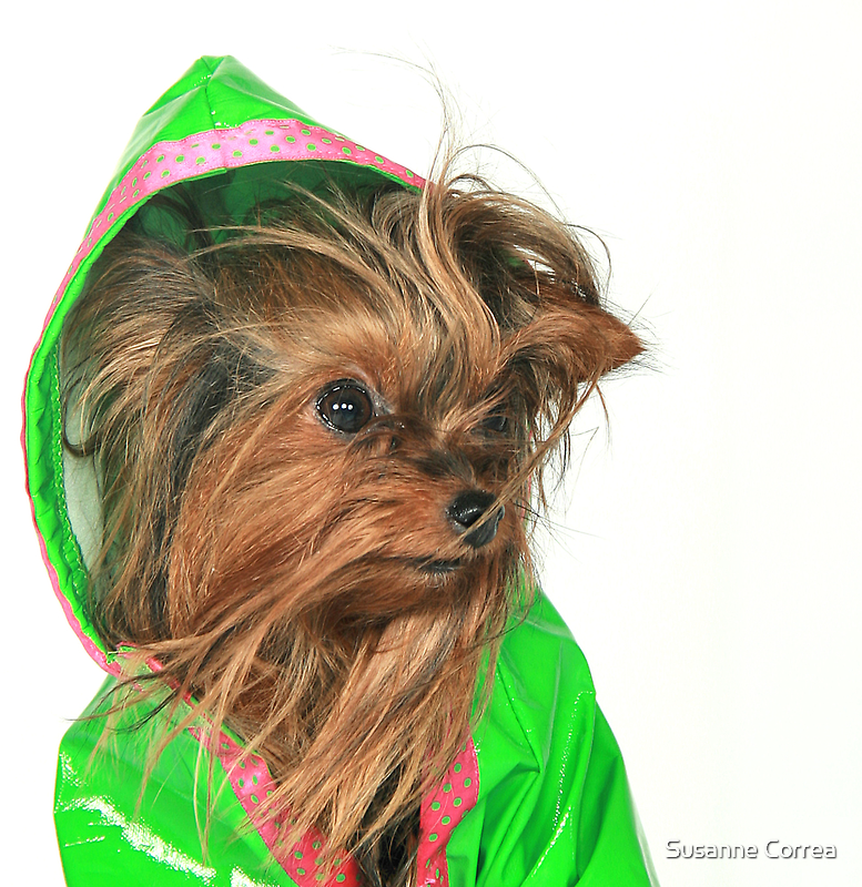 Are you sure Lime Green looks good on me ? by Susanne Correa