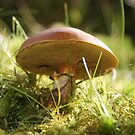 Toad Stool by Gillen