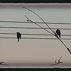 like a bird on the wire .... by Helen Corr