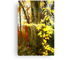Lone Tree / Autumn in Michigan Canvas Print