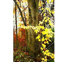 Lone Tree / Autumn in Michigan Photographic Print