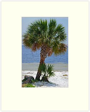 Palm Tree by the Bay by Sandy Keeton