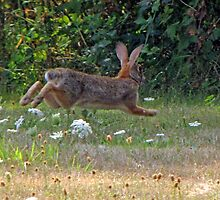 """Look! Up in the sky! It's a boid!""….. ""No! It's SUPER RABBIT!"" by Chuck Gardner"
