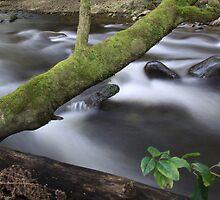Hermitage Creek by John Vandeven