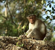 Curious monkey 1 by kaung