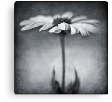 B&W daisy Canvas Print