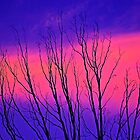 Pink Sunset - Tree Fingers by Campbell Fleming