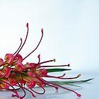 Australian flora by feeee