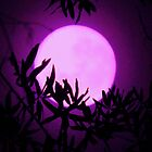 purple moon rising by ANNABEL   S. ALENTON