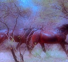 "For Dawn - Special request on ""My Horse Fantasy"" by Magaret Meintjes"