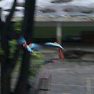 FREE GUACAMAYAS by elatan