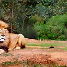 I am King of the Jungle by haymelter