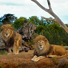 Brothers Pride by haymelter