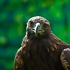 Golden Eagle by Fraser Ross