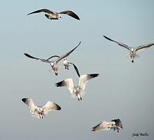 Gulls in Flight by Judy Gayle Waller