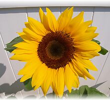 Eva's Sunflower by Judy Gayle Waller