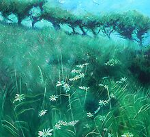 Oxeyed Daisies by Richard Sunderland