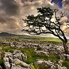 Wind in The Dales by AntonyB