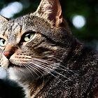 Stripey the cat by Steve Barnes