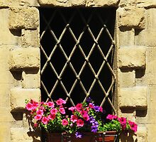 Italian window box with pink flowers by creativetravler