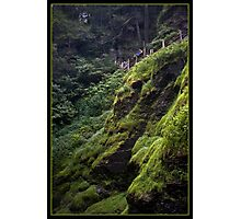 Green Fall Photographic Print