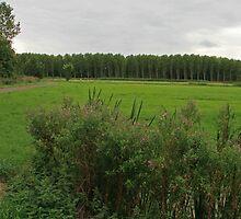 Green Green Grass ....... by Robert Abraham