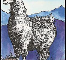 Llama by Kat Anderson