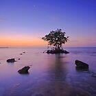 Still Dawn by Rick Gomez
