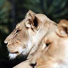 lions head by Michael Walker