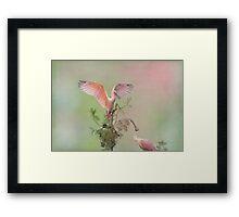 Roseate Queen Framed Print