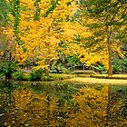 Bursts of yellow at Alfred Nicholas Gardens by Elana Bailey