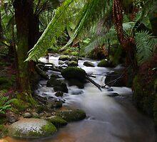 River Run by Tim Beasley
