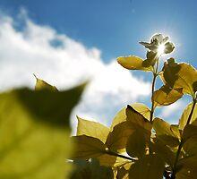 Garden sunshine by theblueribbon