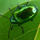 Metalic Green  Monster.. June Bug by MaeBelle
