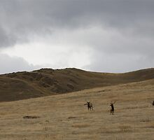 Three Bull Elk, National Bison Range Montana by Peter Kearns