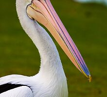 Pete the Pelican!! by Wendi Donaldson