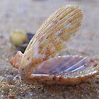 Open Seashell by largo