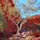 Ghost Gum, Kings Canyon, Northern Territory, Australia by Adrian Paul