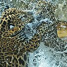 Commotion (a jag fight) by joemc