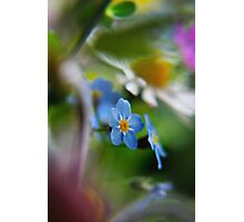 Forget-Me-Not between flowers (from wild flowers collection)  Photographic Print