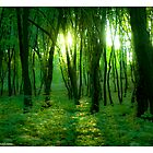 The DeeZ 5Cs Award Banner. ♥ ♥ ♥ ♥ series . Shades of green.Poland. by Brown Sugar. Tribute to Fryderyk Chopin .Favorites: 34 Views: 5961. Featured in Glitter, Sparkle & Shine. by © Andrzej Goszcz,M.D. Ph.D