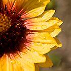 Petals by Matt Benson