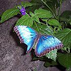 Butterfly by tbailey1