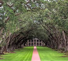 Oak Alley Plantation by steini