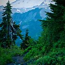 Mt. Baker from Artist Point by Appel