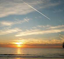 """""""Sunset, Contrail & A Palm Tree"""" by Tim&Paria Sauls"""